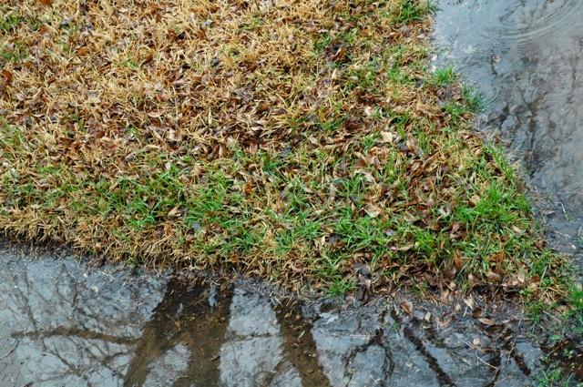 Rainy_march1