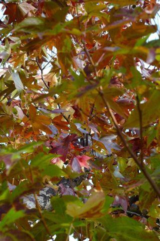 Autumn_leaves2_1