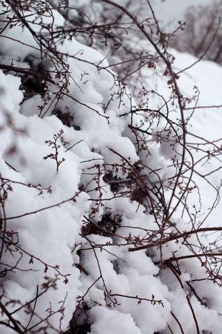 Snowday02
